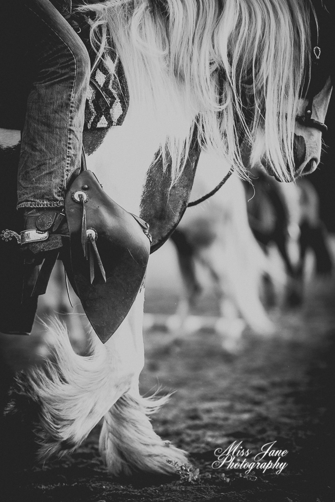 Black and white horse photo