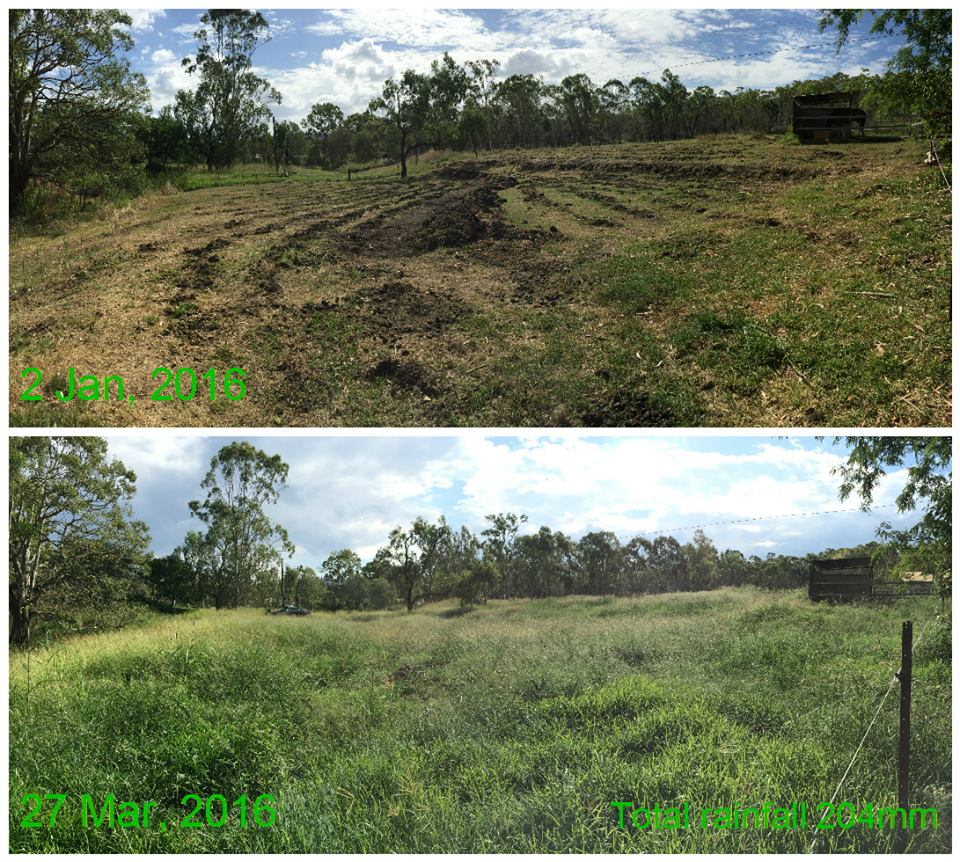 green grass, healhy pasture, perfect pastures, swales, ripped soil, before and after